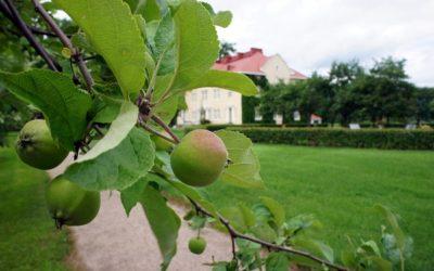 Kesän jäsenmatka Hauhon musiikkijuhlille 3.7.2019